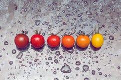 Riga di pomodori Immagine Stock Libera da Diritti