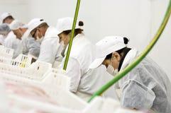 Riga di trasformazione dei prodotti alimentari fotografia stock