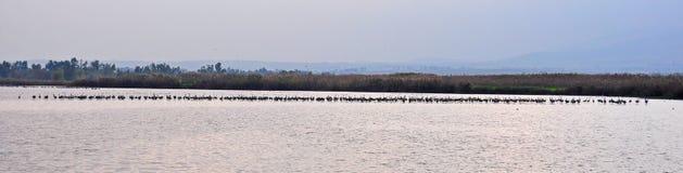 Riga di uccelli Immagine Stock