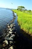 Riga erbosa del litorale con la barriera della roccia Fotografia Stock