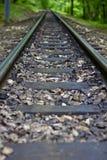 Riga ferroviaria della foresta Fotografia Stock