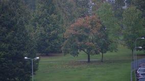 Urban tree and rain autumn 4K. Riga Latvia autumn Urban tree and rain fall stock video footage