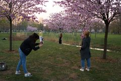 RIGA, LETONIA - 24 DE ABRIL DE 2019: Gente en parque de la victoria que goza de la flor de cerezo de Sakura - canal de la ciudad  fotos de archivo libres de regalías