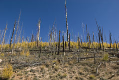 Rigenerazione della foresta Fotografia Stock Libera da Diritti