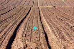 Righe con il seme dell'asparago in terra nera Fotografia Stock Libera da Diritti