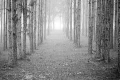 Righe degli alberi Immagini Stock Libere da Diritti
