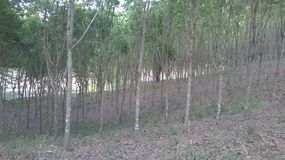 Righe degli alberi Immagini Stock