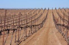 Righe dell'alberello in deserto Fotografie Stock