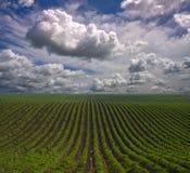 Righe dell'azienda agricola Fotografie Stock