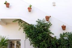 Righe delle piante conservate in vaso su costruzione bianca immagine stock libera da diritti