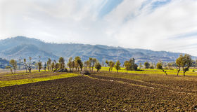 Righe di agricoltura dell'Himalaya Fotografia Stock