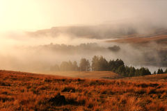 Righe di alberi su una mattina nebbiosa ad alba Fotografia Stock