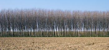 Righe di albero fotografie stock libere da diritti