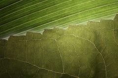 Righe di Leafe Fotografia Stock Libera da Diritti