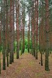 Righe di legno Immagini Stock