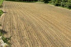 Righe di terra recentemente arata e di semenzali recentemente piantati Immagine Stock