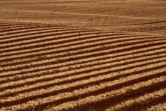 Righe geometriche del raccolto Immagini Stock
