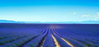 Righe senza fine di fioritura dei giacimenti del fiore della lavanda Vista panoramica Val Immagine Stock Libera da Diritti