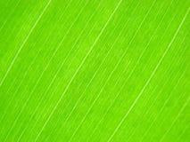 Righe verdi di macro del foglio Fotografia Stock