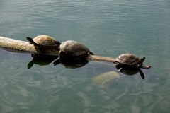 The right direction. For turtles Stock Photos
