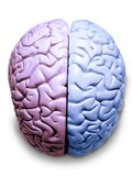 LGBT Transgender Brain Gay Lesbian. Brain colored pink and blue stock photos