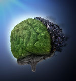 Right and left brain hemispheres Royalty Free Stock Image