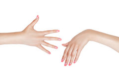 The right and left female hand. Royalty Free Stock Photography