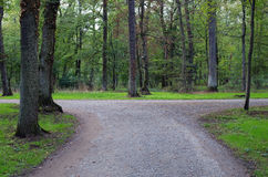 Right or left. ? A fork in the road in a forest Royalty Free Stock Images