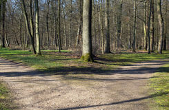 Right or left. A fork in the road in a forest Royalty Free Stock Photography