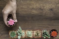 Right male hand catch small flower pot Royalty Free Stock Photos