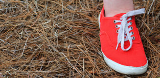 Right Side Red Shoe Royalty Free Stock Images
