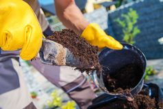 Right Soil For the Plants Royalty Free Stock Photography