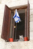 Right to return to Israel. The cat looks out of the window through a lattice Stock Images