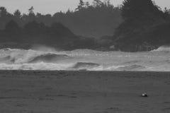 Rigonfiamento praticante il surfing della tempesta dei baldacchini delle cime d'albero Fotografia Stock