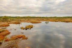 Riisa path on Sooma swamp Royalty Free Stock Image