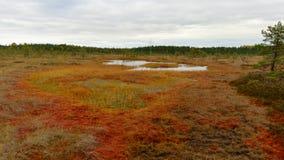 Riisa-Weg auf Sooma-Sumpf lizenzfreies stockfoto