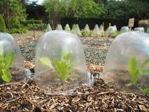 Rij die van kleine slainstallaties in de plastic containers van DIY groeien stock afbeeldingen