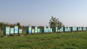 Rij van bijenkorven op het weiland stock video