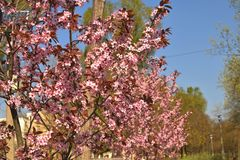 Rij van Bloeiende Bomen Stock Foto's