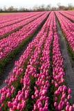 Rij van bloemen stock foto's