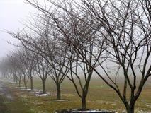 Rij van bomen Royalty-vrije Stock Foto's
