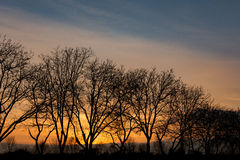 Rij van bomen Royalty-vrije Stock Fotografie