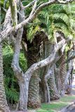 Rij van Bomen in Australië Royalty-vrije Stock Fotografie