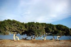 Rij van bomen door oceaan Royalty-vrije Stock Foto's
