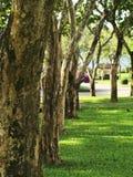 Rij van bomen in een park Stock Fotografie