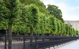 Rij van bomen en lange omheining Stock Foto's