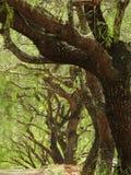 Rij van bomen met grote boegen en groene boeg op een zonnige dag stock foto's