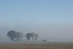 Rij van bomen in mist royalty-vrije stock foto's