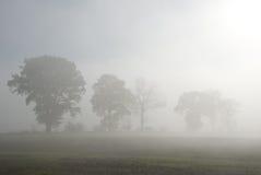 Rij van bomen in mist Stock Afbeeldingen