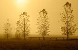 Rij van bomen in ochtendnevel. Stock Fotografie